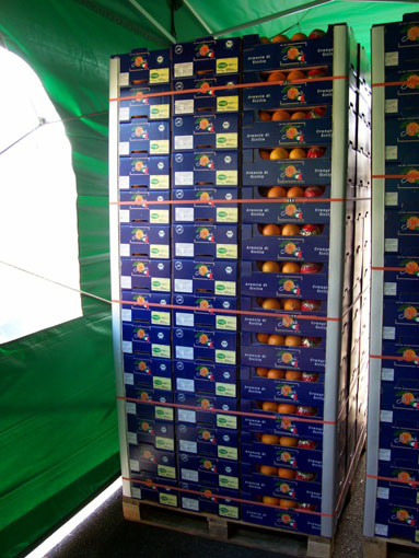 Pallet of oranges ready for transport